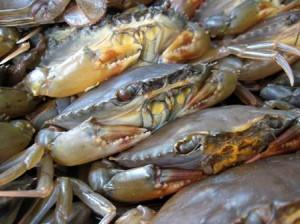 Vietnam crabbing