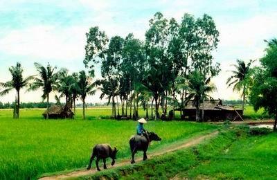 Vietnam peasant