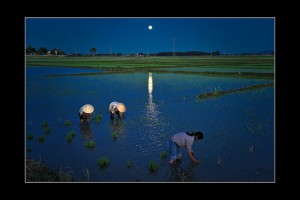 cay lua toi - vietnam night sky over country side rice field