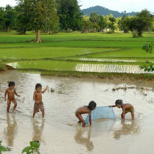 bac ca ruong con nit children catching fish vietnam rice field