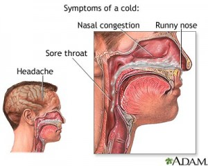 common cold symptoms and treatments winter 2012