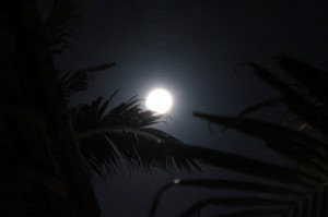 moon over the coconut tree leafs Vietnam