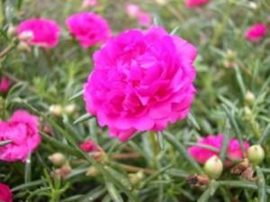 bong hoa 10 gio vietnam 10 o'clock flower