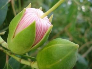 hoa ban - bong ban