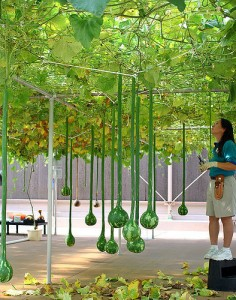 hydroponics garden larger plants that crawl and hang