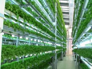 hydroponics gardening massive scale