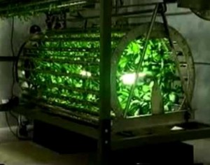hydroponics weird and strange growing technique spinning like outer space planting gardenning