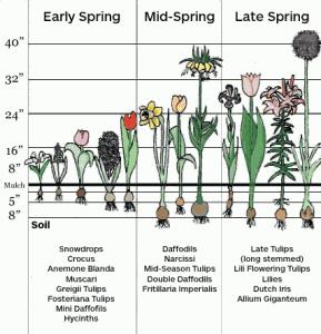 spring planting now fruit vegetables flowers garden march 2012